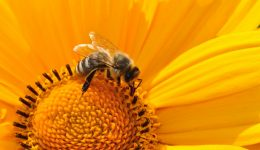 bee-pollen-nectar-yellow-67560