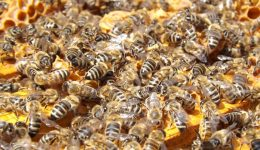 bees beehive beekeeping honey 48022