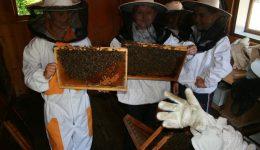 Čebelarski krožek Velike Lašče