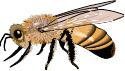 Čebelarsko društvo Velike Lašče